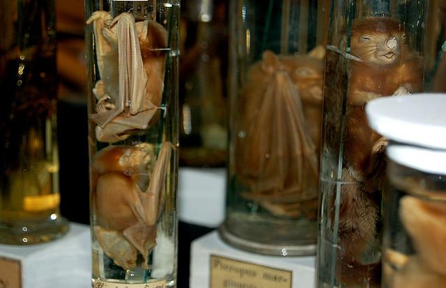 Bats in Jars