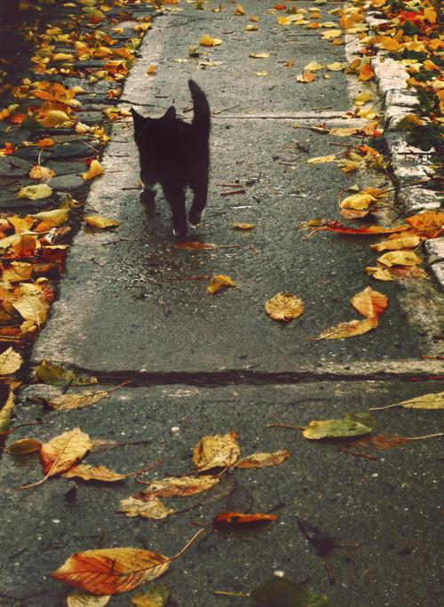 Sidewalk Kitten