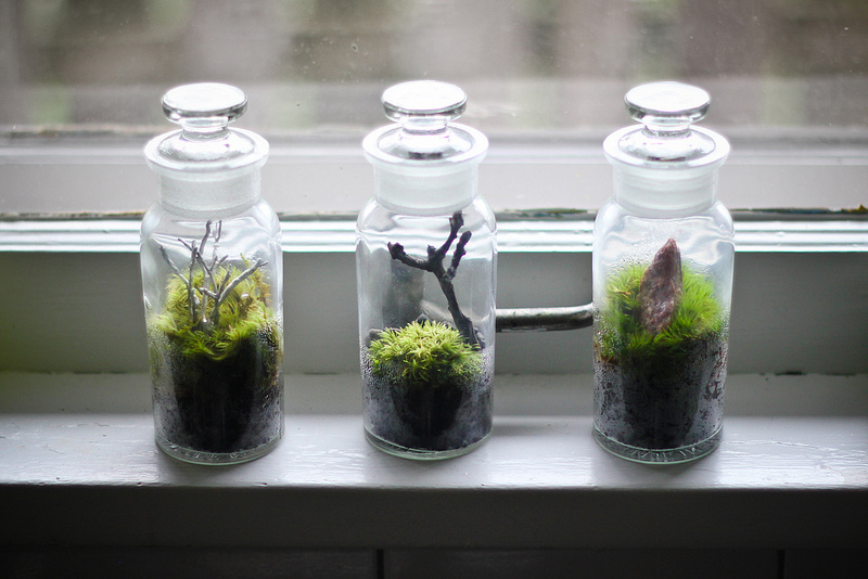 Three Tiny Terrariums