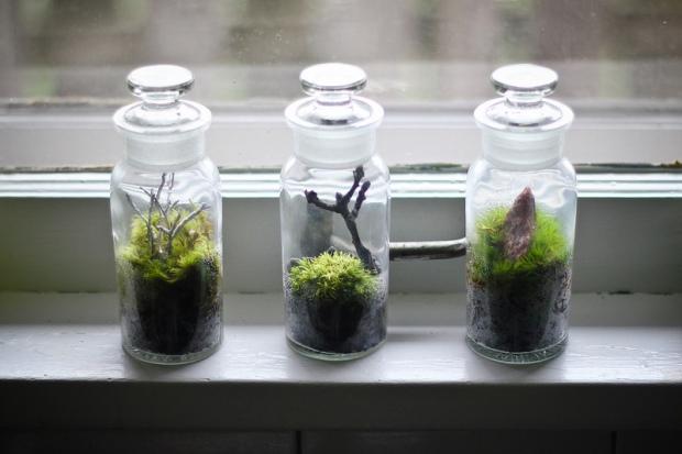 Three Tiny Terrariums