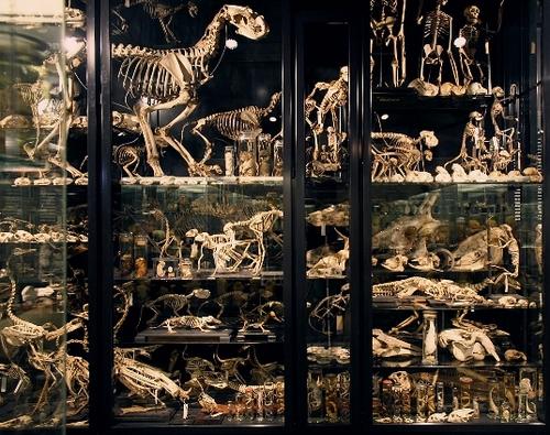 Vrolik Museum, Amsterdam