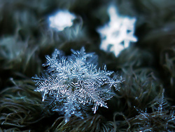 ...with spine, Macro snowflakes by ChaoticMind75.