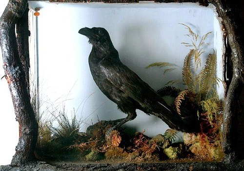 Dickens' Crow
