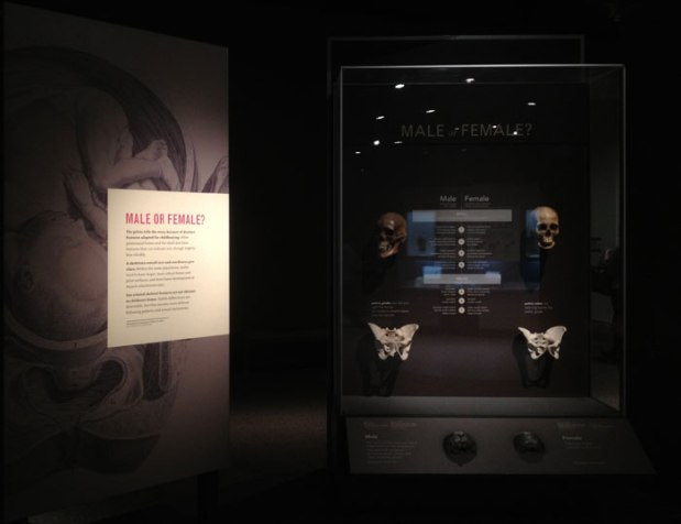 nmnh_bone_exhibit