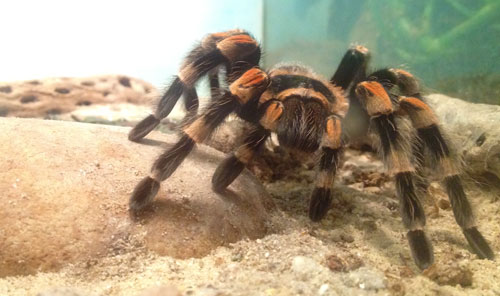 nmnh_insectzoo_spider