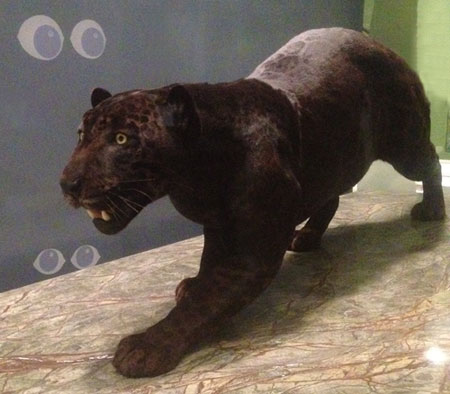 nmnh_mammalhall_jaguar