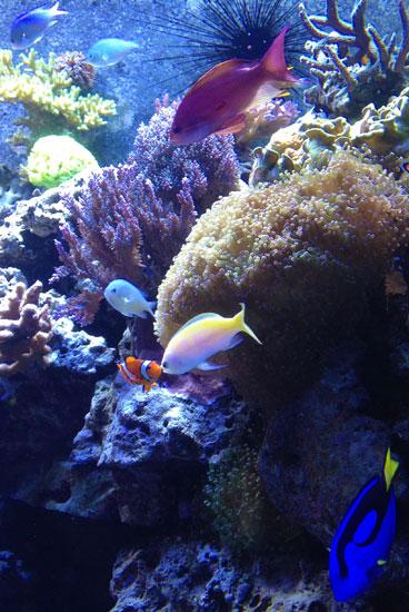 nmnh_oceanhall_aquarium
