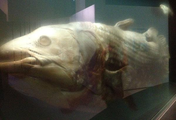nmnh_oceanhall_prehistoricfish